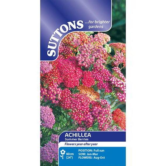 Achillea Seeds - Summer Berries