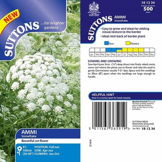Ammi majus Seed - Snowflake
