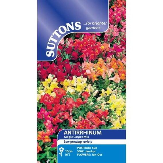Antirrhinum Seeds - Magic Carpet Mix