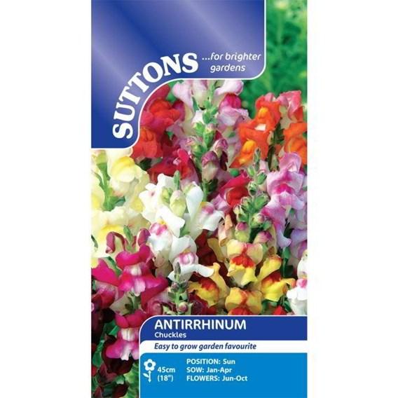Antirrhinum Seeds - Chuckles