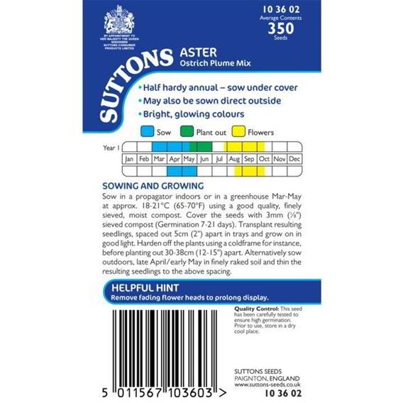 Aster Seeds - Ostrich Plume Mix