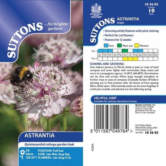 Astrantia Seeds