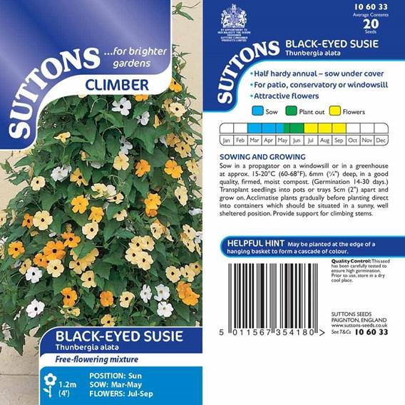 Black-Eyed Susie Seeds