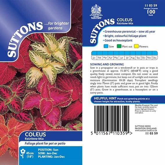 Coleus Seeds - Rainbow Mix