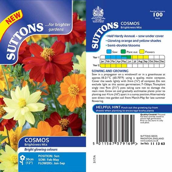 Cosmos Sulpureus Brightness Mix