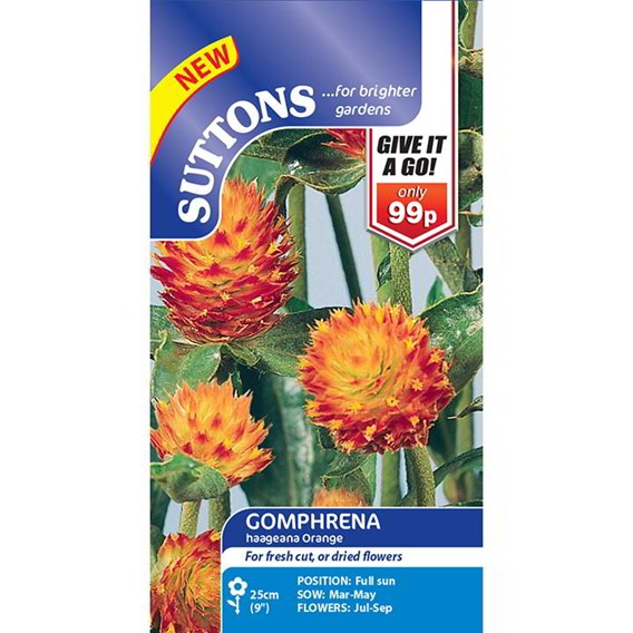 Gomphrena Seeds - haageana Orange