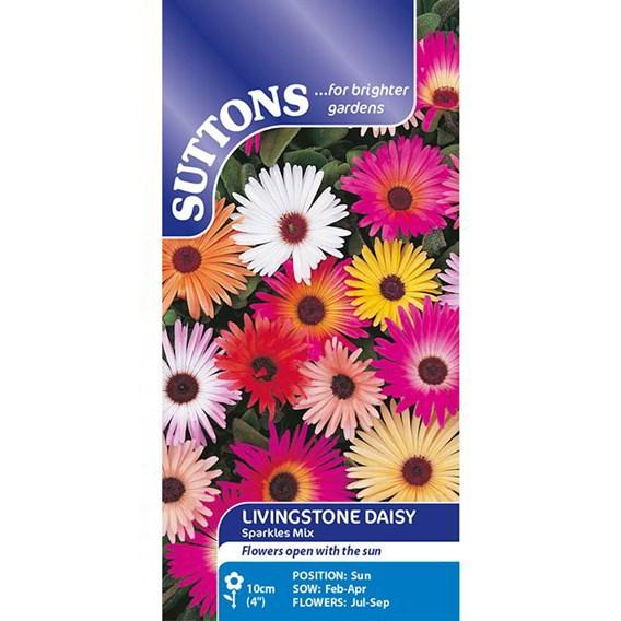 Livingstone Daisy Seeds - Sparkles Mix