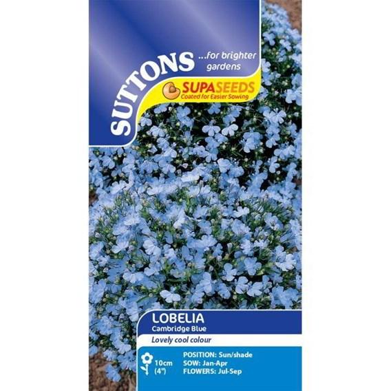 Lobelia Seeds - Cambridge Blue