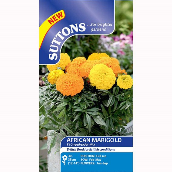 Marigold African F1 Cheerleader Mix
