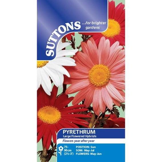 Pyrethrum Seeds - Large Flowered Hybrids