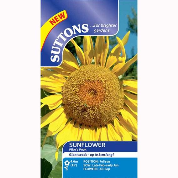 Sunflower Pikes Peak
