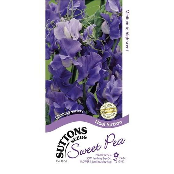 Sweet Pea Seeds - Noel Sutton