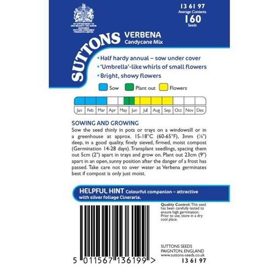 Verbena Seeds - Candycane Mix