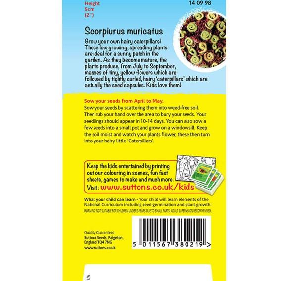 Scorpiurus Muricatus - Caterpiller plant