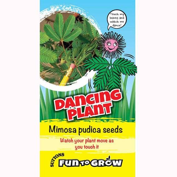 Sensitive plant - Dancing plant