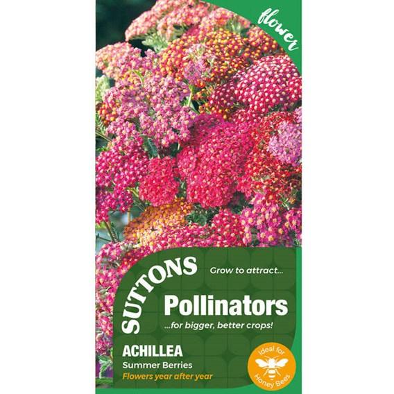 P & P - Achillea Summer Berries