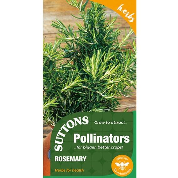 Herb Seed - Rosemary