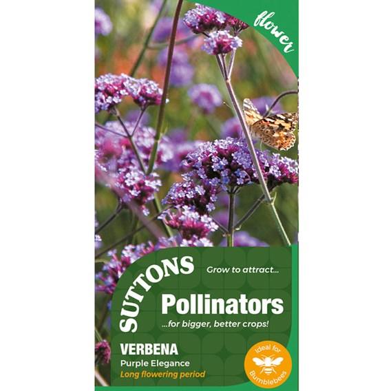 Verbena bonariensis Seeds - Purple Elegance