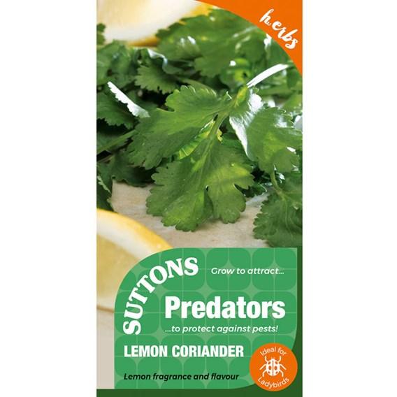 Herb Seed - Lemon Coriander