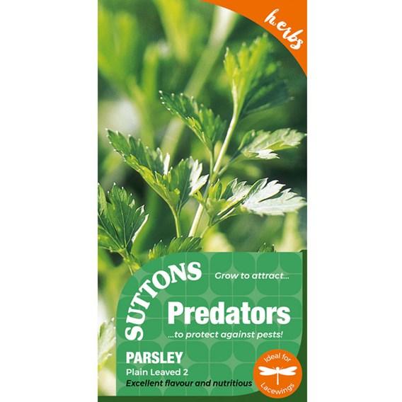 Parsley Seeds - Plain Leaved 2