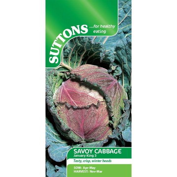 Cabbage Seeds - January King 3