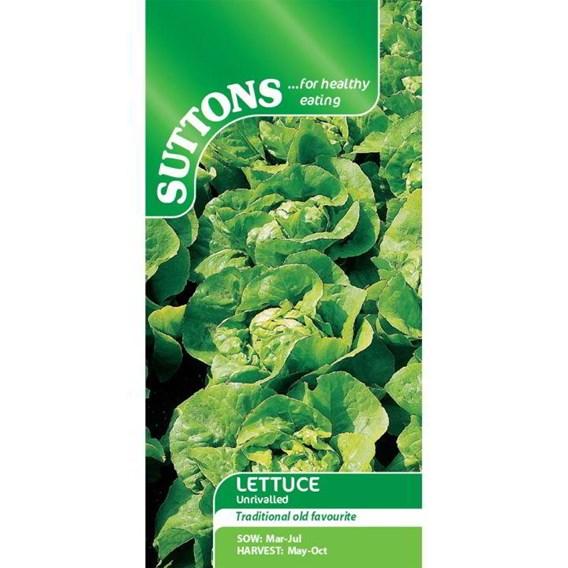Lettuce Seeds - Unrivalled