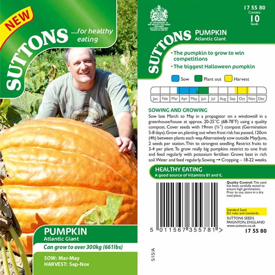 Pumpkin Seeds - Atlantic Giant
