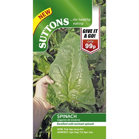 Spinach Seeds - Gigante d'Inverno
