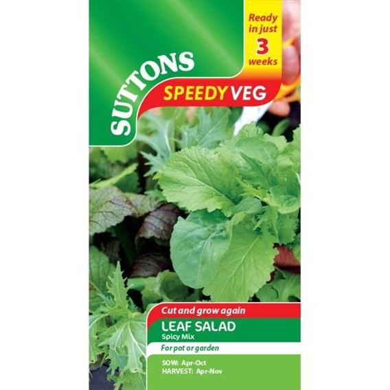 Speedy Veg Seed - Leaf Salad Spicy Mix