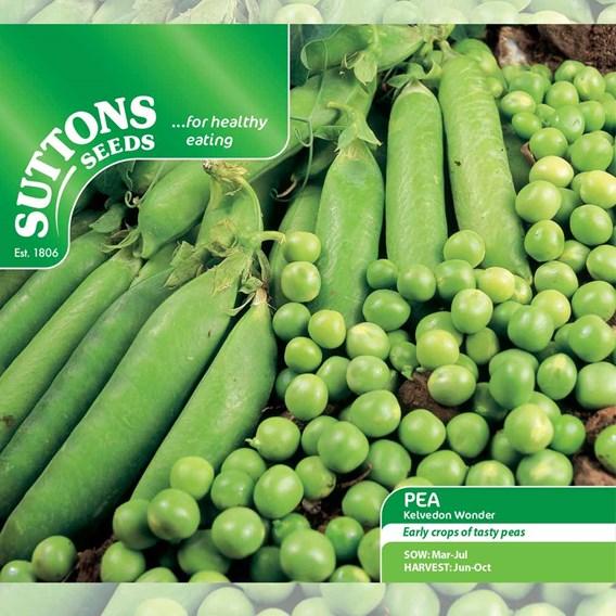 Pea Seeds - Kelvedon Wonder
