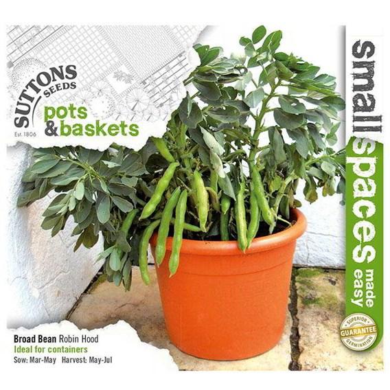 Bean (Broad) Seeds - Robin Hood