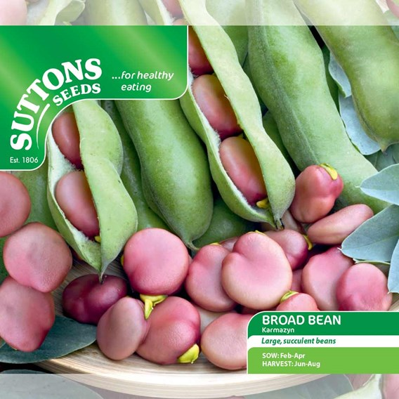 Bean (Broad) Seeds - Karmazyn