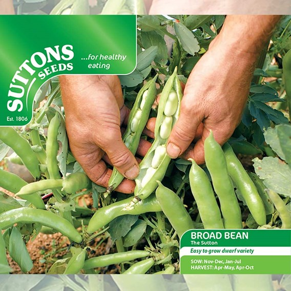 Bean (Broad) Seeds - The Sutton