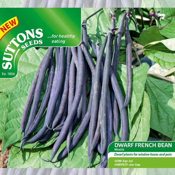 Dwarf French Bean Mistik