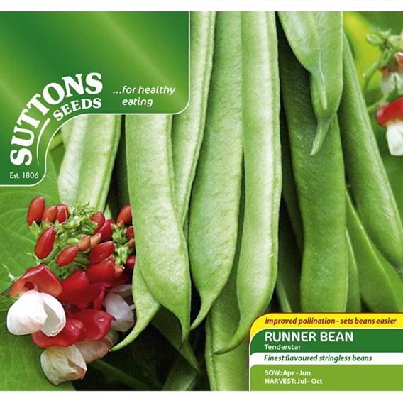 Bean (Runner) Seeds - Tenderstar