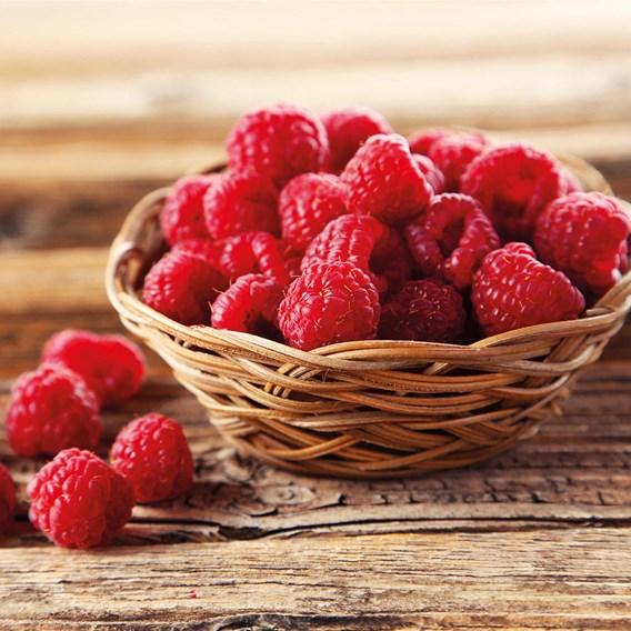 Raspberry (Rubus ideaus) Autumn Bliss (4 Canes) 3L Pot x 1