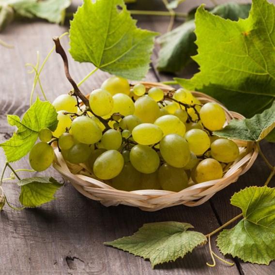 Grape (Vitis) Lakemont 3L Pot x 1