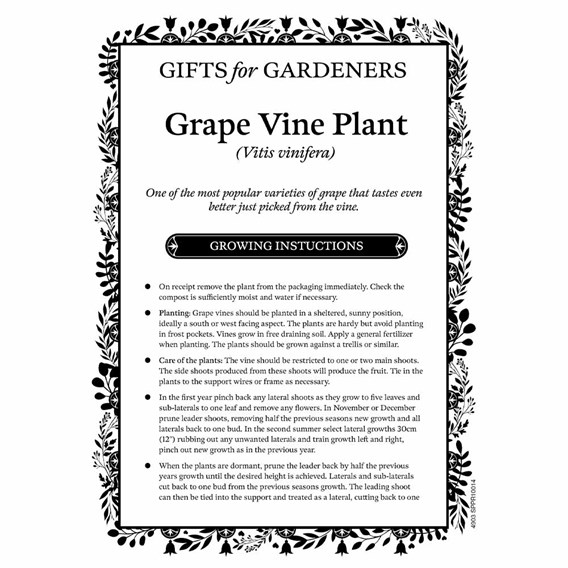 Vine Flame 2Ltr plus  bottle red wine