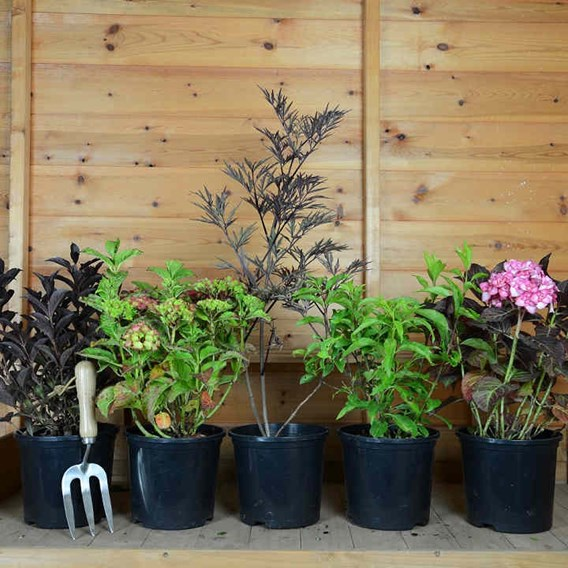 Nurseryman's Shrub Selection (5)