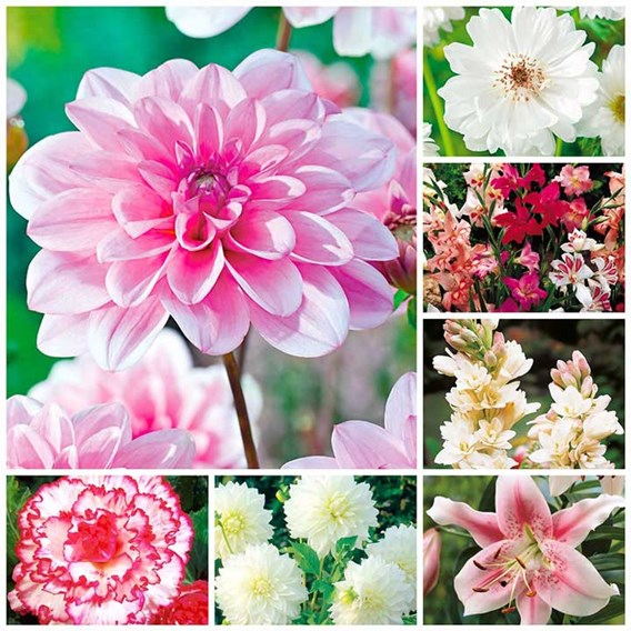 Passionate about Pink  Summer Bulb Collection