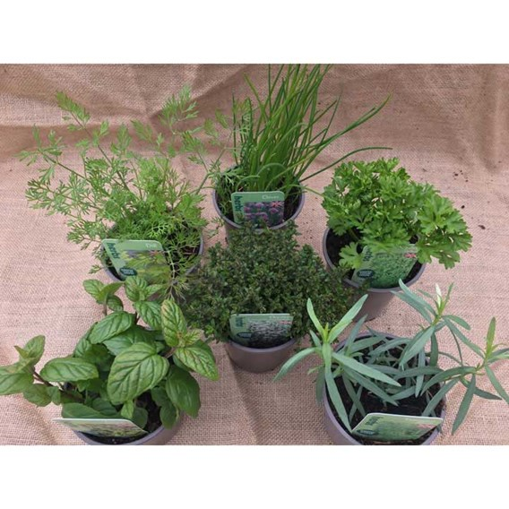 Herb Collections