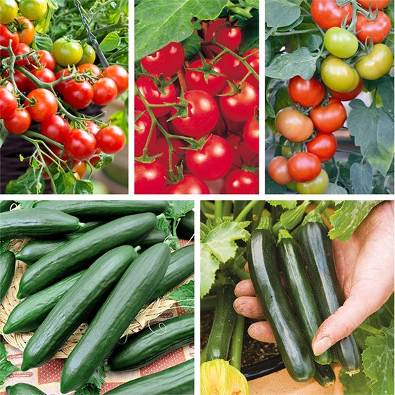 Outdoor Cropping Summer Veg Collection