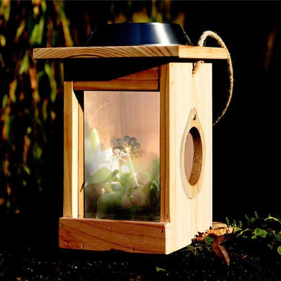 Illuminated Mini Beast Centre