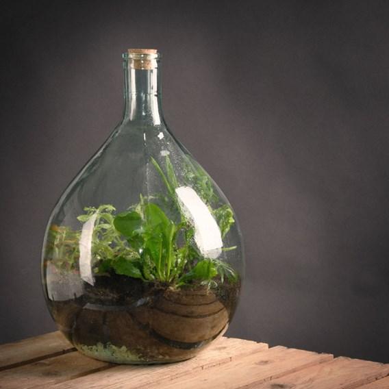 Terrarium Bottle 15L