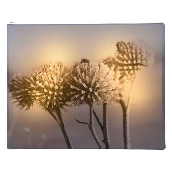 Decorative LED Canvas -Thistle