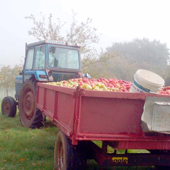 Cider Making Workshop with Lunch at The Courtney's Orchards