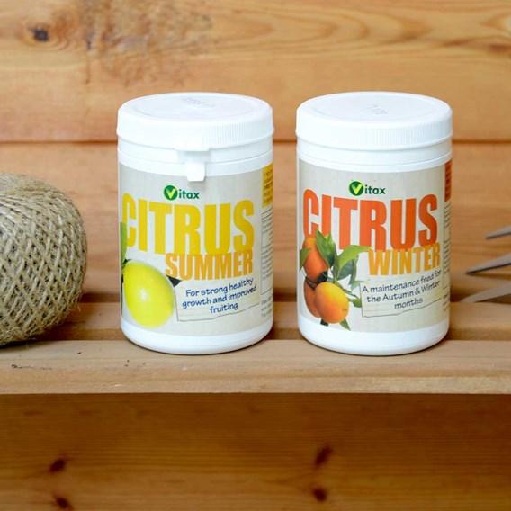 Citrus Tree Food