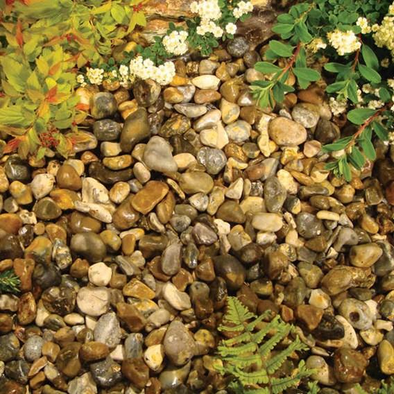 Oyster Pearl Pebbles Bulk