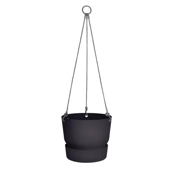 Greenville Hanging Basket