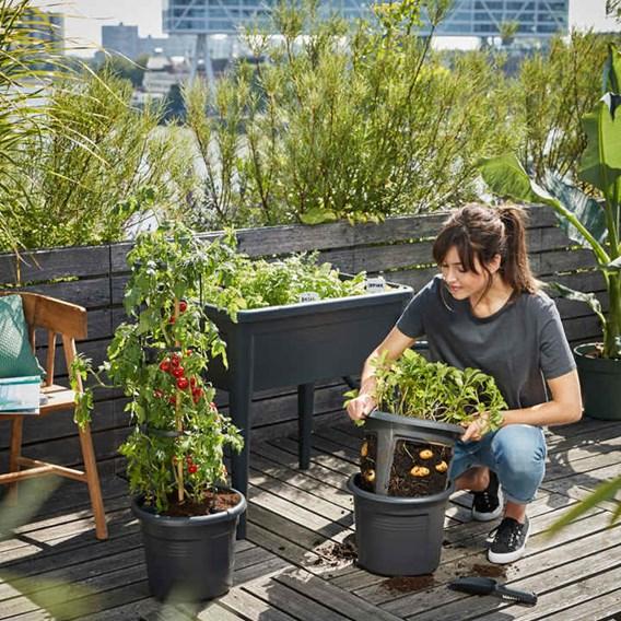Tomato Pot & Grow Frame